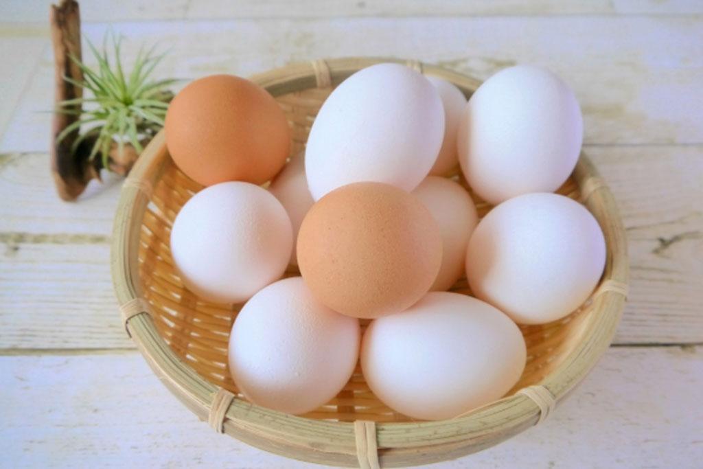 卵の殻には栄養がある